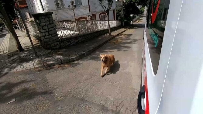 Pies pędził za karetką, bo w środku była jego pani