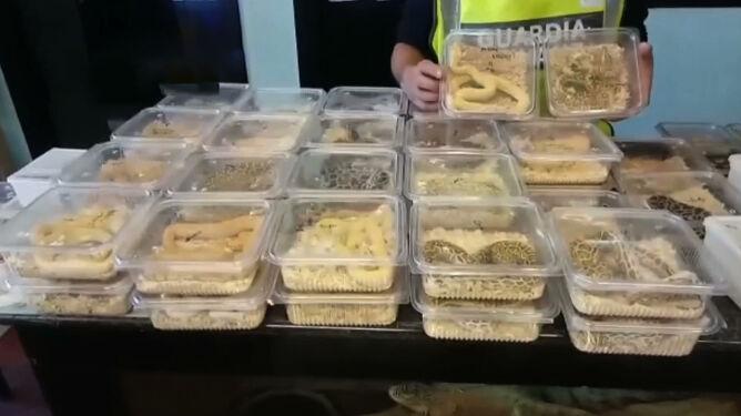 W Ankonie skonfiskowano 138 pytonów