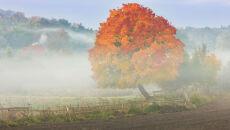 Prognoza pogody na dziś: poranne mgły, do 16 st. C. Lokalnie opady