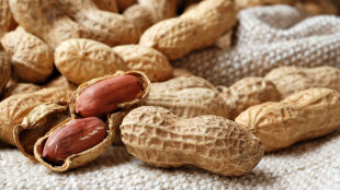 Męczy cię alergia na orzechy? Niebawem to może się zmienić