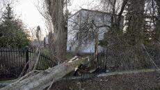Powalone drzewo na gdańskiej Olszynce (PAP/Adam Warżawa)