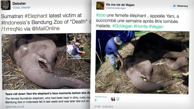 """W """"zoo śmierci"""" na indonezyjskiej <br />wyspie Jawa padła słonica Yani"""